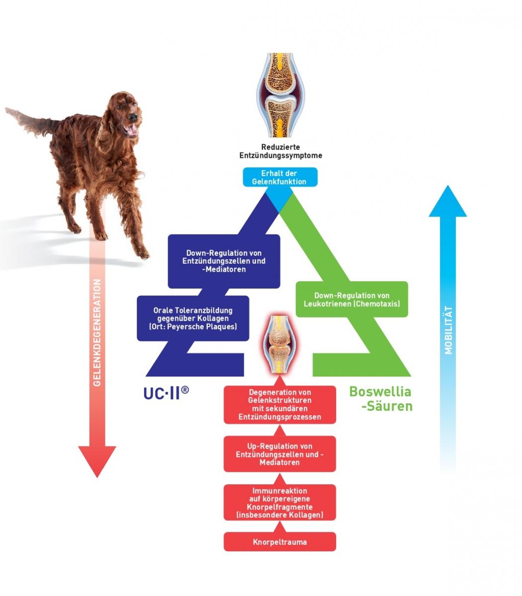 Neu von Vetoquinol: Flexadin® Advanced revolutioniert die begleitende Unterstützung bei Osteoarthrose